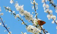 İlkbahar Mevsimi İle İlgili Hikaye Kısa