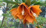 Çiçekli Bitki Nedir Kısaca Örnekler