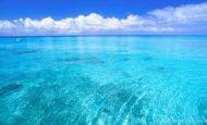 Okyanus Ekosisteminde Hangi Canlılar Yaşayabilir?