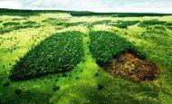 Orman Haftası İle İlgili Hikaye Kısa