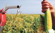 Bitki Kökenli Yakıtlar Ve Bunlardan Yararlanma Yolları Nelerdir?