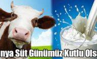 Dünya Süt Günü İle İlgili Sloganlar Sözler