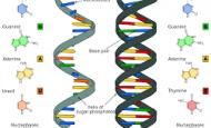 DNA Ve RNA Arasındaki Farklar Nelerdir Maddeler Halinde