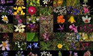 Endemik Bitki Nedir Örnek Veriniz.