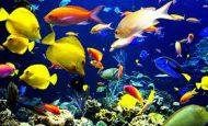 Balıkların Genel Özellikleri Nelerdir Kısaca