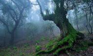 Ağaçların Kuzeye Bakan Kısımları Neden Yosun Tutar?