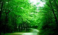 Ormanlar İnsanlar İçin Neden Önemlidir?