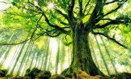 Ağaç Sevgisi İle İlgili Sloganlar