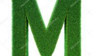 M Harfiyle Başlayan Bitkiler Sebzeler Ve Meyveler