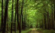 Ormanın Faydaları Nelerdir Maddeler Halinde