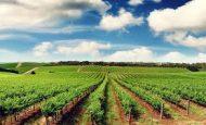Tarımın Gelişmesini Sağlayan Doğal Ve Beşeri Faktörler Nelerdir?