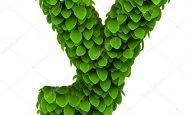 Y Harfiyle Başlayan Bitkiler Sebzeler Ve Meyveler