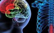 Beyin Omurilik Sıvısının (BOS) Görevleri Nelerdir?