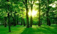 Doğayı Korumak İçin Neler Yapmalıyız Maddeler Halinde