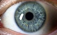 Göz Sağlığımızı Korumak İçin Hangi Besinleri Yemeliyiz?