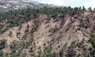 Ormanı Korumak Erozyonu Önlemek Demektir Anlamı Açıklaması