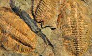 Taşlaşmış Fosiller Nasıl Oluşur?