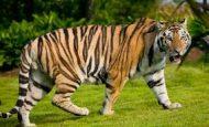 Etçil Ve Otçul Hayvanlara Örnekler 10 Tane