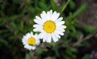 Böceklerin Bitki Alemine Katkıları Nelerdir?