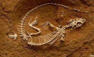 Fosillerin İncelendiği Bilim Dalı Hangisidir?