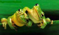 Kurbağaların Özellikleri Nelerdir Maddeler Halinde