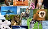 Omurgalı Hayvanlar İle İlgili Sorular Ve Cevapları