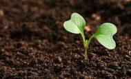 Toprak İle İlgili Sorular Ve Cevapları
