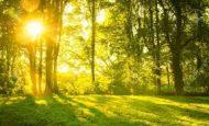 Canlıların Güneş Enerjisini Nasıl Kullandığını Açıklayan Hikaye