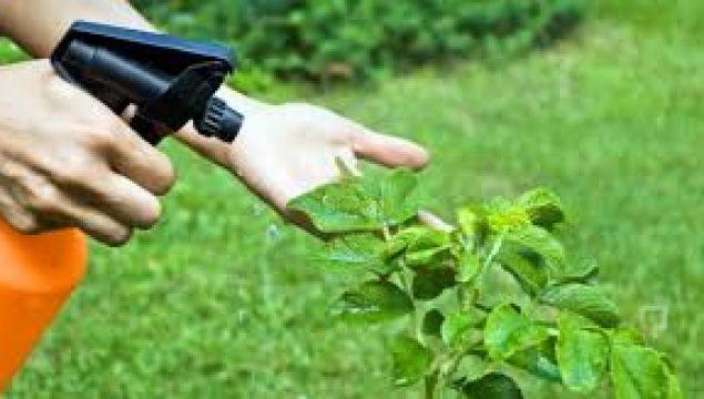 DGS Bitki Koruma Bölümü Taban Puanları ve Kontenjanları 2017