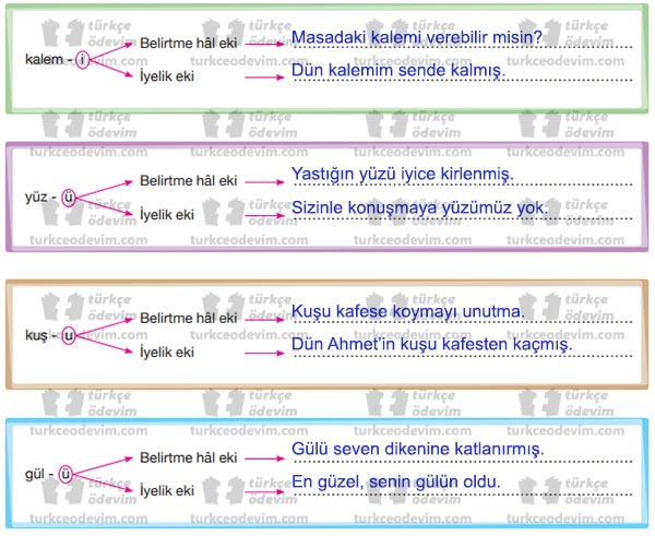 6. Sınıf Başak Matbaacılık Eşekli Kütüphaneci Mustafa Amca Metni Etkinlik Cevapları - Belirtme Hali ve İyelik Ekleri