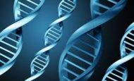 Akraba Evliliğinin Genetik Sonuçları Nelerdir?