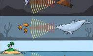 Sesin Sıvılarda Yayılmasına Örnekler