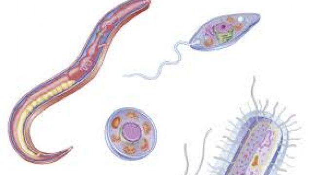 Protozoa Kültürünün Amacı Nedir?