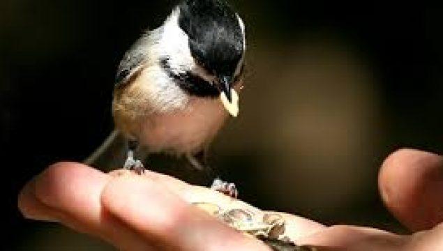 Merhamet Cömertlik ve Yumuşaklık ile İlgili Kompozisyon