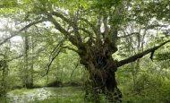 Bir Fidanın Ağaç Olmasını Kendi Ağzından Anlatan Hikaye